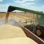 Financement de la création variétale : le SOS de semences en détresse