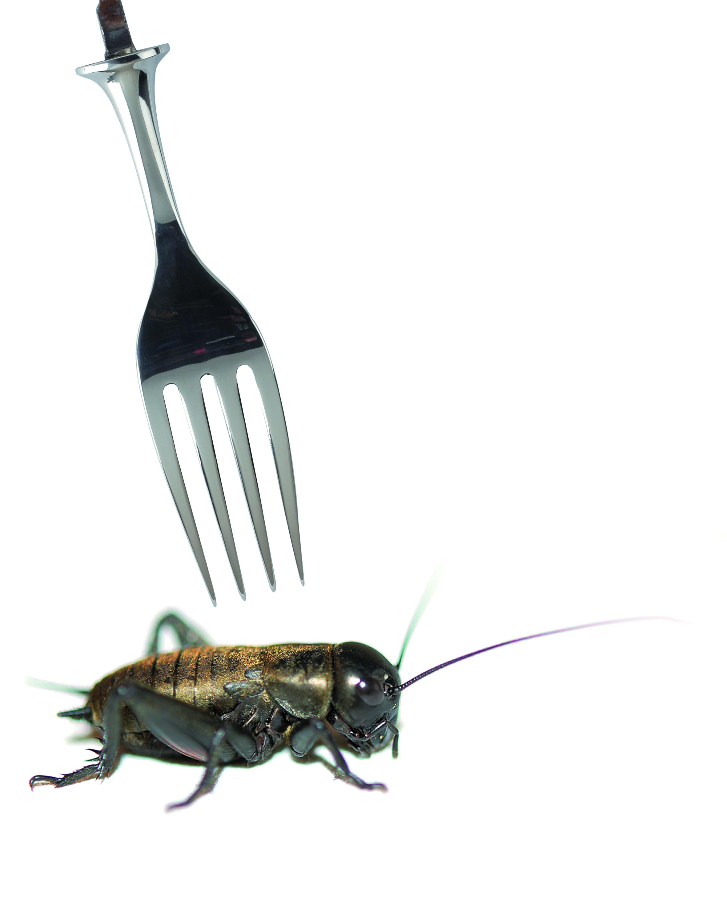 Élevage d'insectes : l'eldorado du futur ?