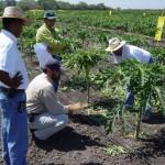 L'utilisation des biostimulants en agriculture est en développement croissant à travers le monde.