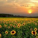 Changement climatique : Un club pour valoriser le potentiel de l'agriculture