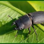 Bientôt une filière protéique à base d'insectes ?