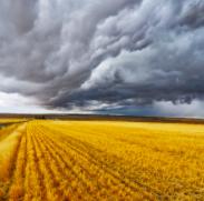 Comptes de l'agriculture : baisse du résultat moyen de la Ferme France en 2019
