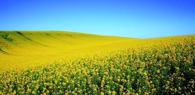 Plant Advanced Technologies lance un projet de découverte de nouveaux bio-herbicides