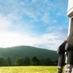 Biocarburants : La recherche sur la deuxième génération progresse en Allemagne