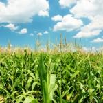 Adoption de la nouvelle réforme de la PAC par le conseil des ministres de l'agriculture
