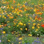 De nouveaux indicateurs permettant un plus grand succès des restaurations écologiques