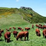 L'apport des clôtures virtuelles pour garder les vaches !