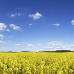 Bayer va donner accès aux études sur le glyphosate