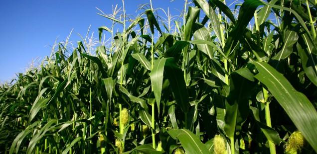 Un modèle pour mieux choisir ses semences en fonction du climat !