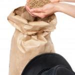Traitement de semence : Bayer porte plainte devant la cours de justice européenne