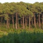 Quand des principes de l'agroécologie s'appliquent aux recherches en écologie forestière !