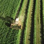 Moins de 1% des pesticides… atteindraient leur cible !