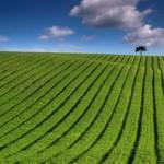 Les effets de l'augmentation du CO2 atmosphérique sur l'agriculture