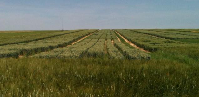 Des parcelles plus petites et plus diversifiées favorisent la diversité des plantes jusqu'au centre des champs