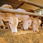Lancement d'un outil d'évaluation en élevage bovin