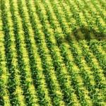 Nouvelles technologies : Les agriculteurs toujours plus séduits, mais pas enclins à dépenser davantage