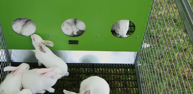 Des cages «terriers» pour lapins !