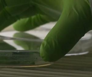 Bientôt de la production d'éthanol à partir de tabac énergétique ?