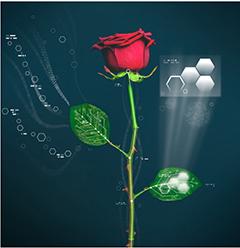 Quelles applications possibles pour les «roses bioniques» ?