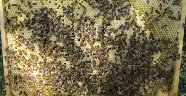 Le plan apicole durable prolongé pour deux années supplémentaires