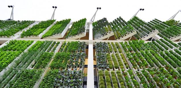 L'avenir de la culture hydroponique en ville passe-t-il par la verticalisation de la production ?
