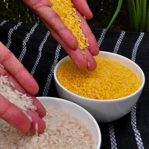 Plus de 100 prix Nobel adressent une lettre de soutien en faveur des OGM !