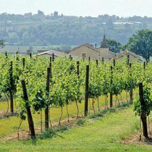Deux vignerons indépendants sur trois seraient certifiés en agriculture biologique