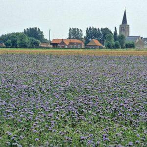 Quelle est l'évolution de la biodiversité lors du processus de restauration de sols mis en jachère ?