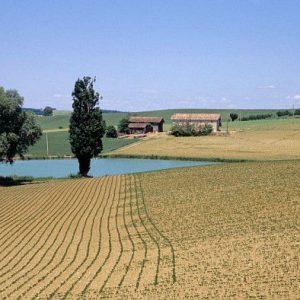 Soja : Vers les 250 000 hectares en France pour 2025 ?
