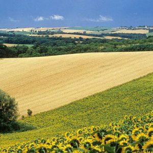 Une étude liste les freins au développement de l'agriculture de précision