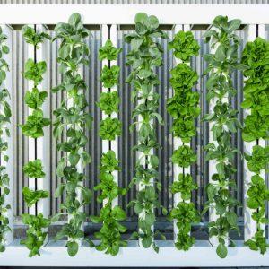 Acquisition stratégique dans le secteur de l'agriculture urbaine