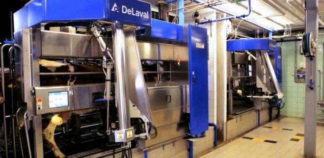 Les robots de traites bannis de la filière Comté