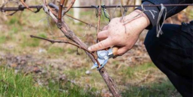 R2T2 : Un projet de robot à 3 millions d'euros pour soulager les viticulteurs
