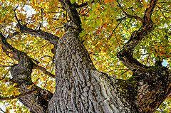Une avancée clé pour mieux comprendre la réponse évolutive des écosystèmes forestiers face au changement climatique ?