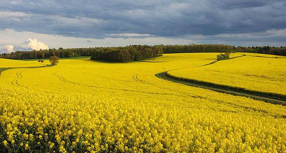 Biocontrôle : Des réussites… mais encore des verrous à lever