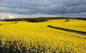 Un projet pour accélérer l'émergence de solutions de biocontrôle en Bourgogne