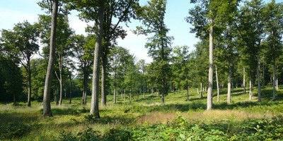 Le génome du chêne lève un voile sur la longévité des arbres