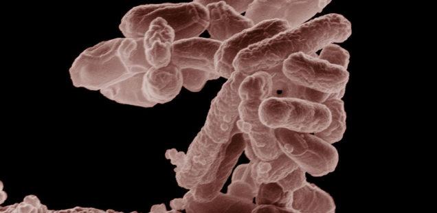 Biologie de synthèse : mieux comprendre la production de protéines et la croissance bactérienne