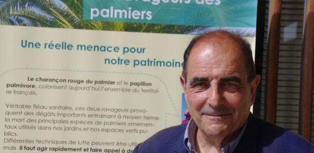 Palmiers : «La disparition de l'insecticide  imidaclopride est extrêmement brutale»