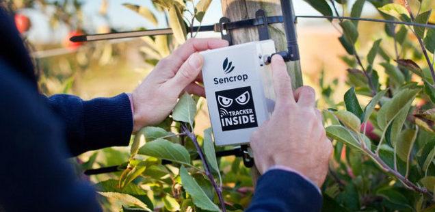 Un capteur à forte sensibilité pour détecter eau et glace sur les feuilles de vignes