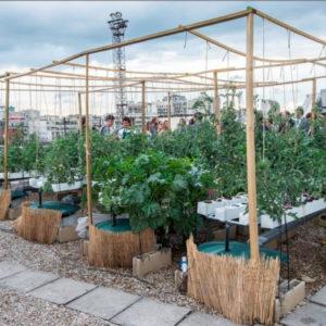 Une entreprise d'agriculture urbaine rachetée par des acteurs du monde agricole