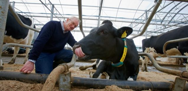 La 5G déjà testée sur des colliers connectés pour vaches