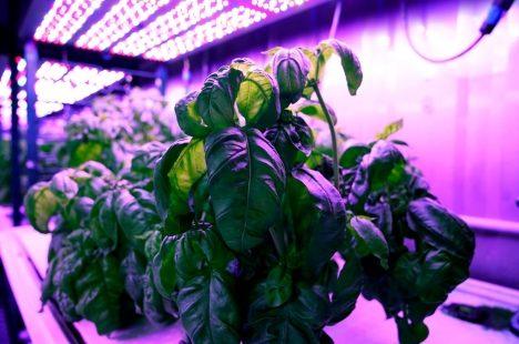 Le MIT fait usage d'une IA pour améliorer le goût des plantes aromatiques !
