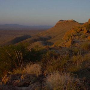 Biodiversité : le rôle essentiel des espèces rares dans la multifonctionnalité des écosystèmes