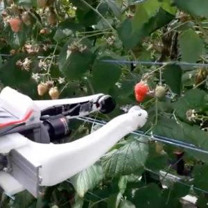 Robocrop : Le robot cueilleur qui crève l'écran outre Manche !