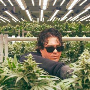 Les lampes LEDs sont-elles le futur de la culture du cannabis ?