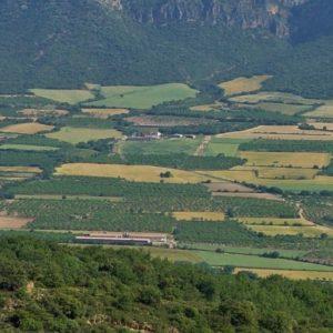 Des mosaïques de cultures plus complexes pour une plus grande biodiversité dans les paysages agricoles