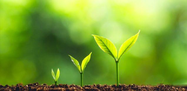 Un concours pour booster les start-up du végétal !