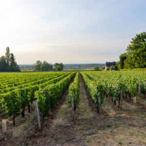 Bayer lance une nouvelle solution de biocontrôle pour la vigne