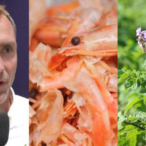 Pourquoi le chitosan stimule les défenses des plantes ?